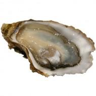 Oyster/Kalwa  (Cleaned)