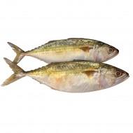 Mackerel /Bangde