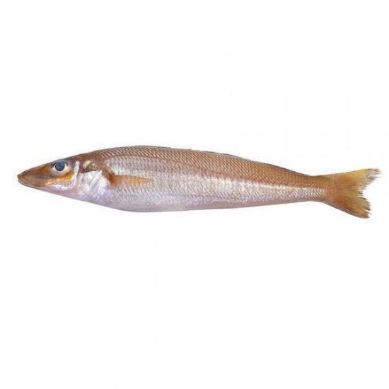 Mudoshi/ Lady Fish Small
