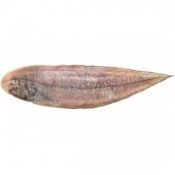 Lepo/ Sole Fish medium