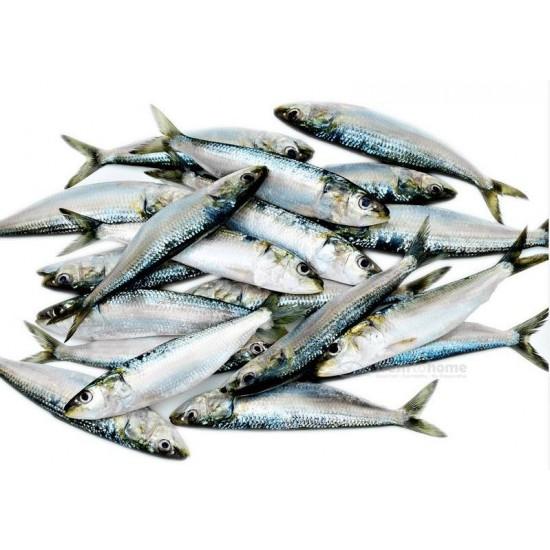 Tarli/Sardines