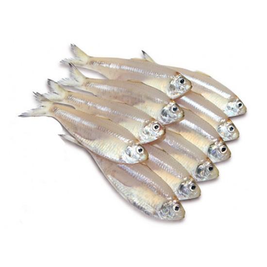 Veli/White Sardines